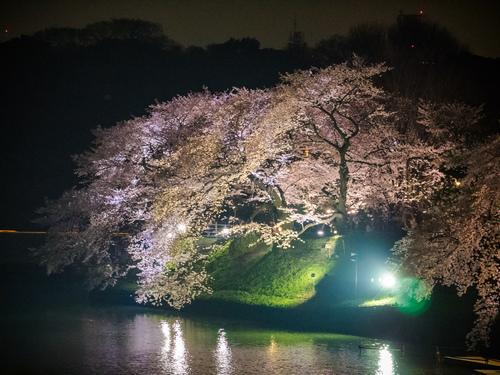 東京機票櫻花祭景點千鳥之淵