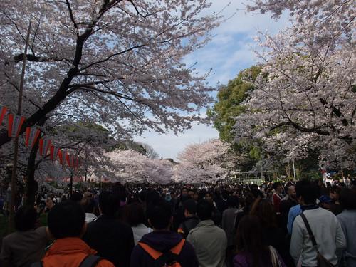 東京機票櫻花祭景點上野公園