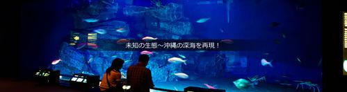沖繩機加酒景點推薦美麗海水族館
