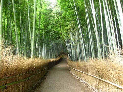 京都自由行推薦嵐山竹林
