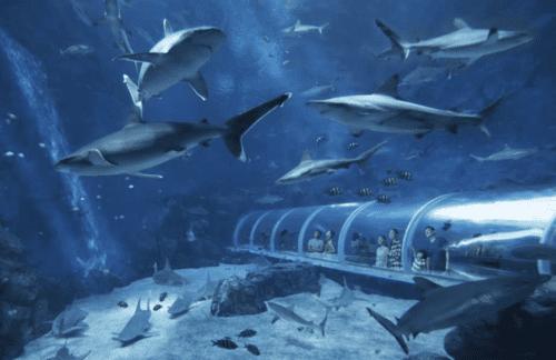 新加坡景點推薦s.e.a.海洋館