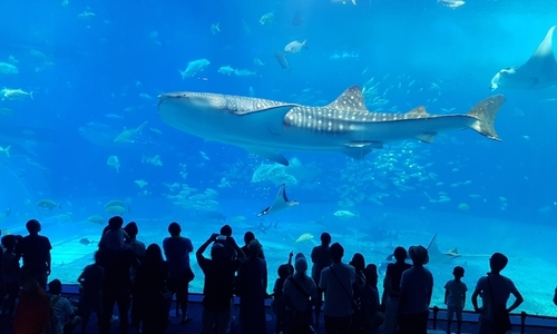 沖繩旅遊推薦美麗海水族館
