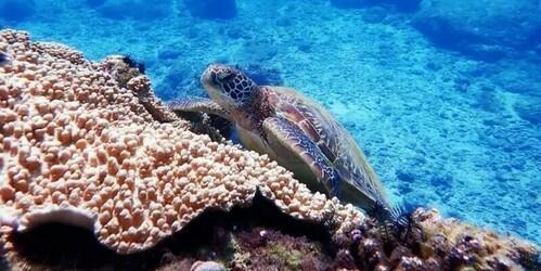 小琉球旅遊與海龜同游