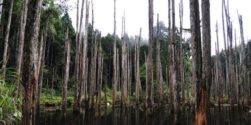 溪頭旅遊景點推薦忘憂森林