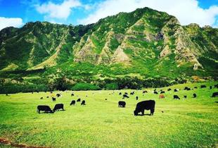 【走進侏儸紀公園拍攝場景】古蘭尼牧場一日遊 (Kualoa Ranch)