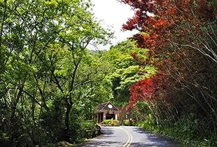 【台灣秋冬賞景】宜蘭棲蘭神木X太平山翠峰湖二日遊