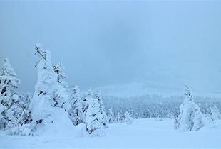 【韓國冬日慶典】東北樹冰之旅—宮城藏王樹冰一日遊
