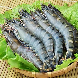 嚴選大規格草蝦